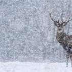 برفباری