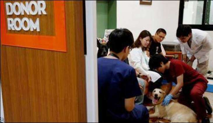 Taiwan establishes Dog's Blood bank