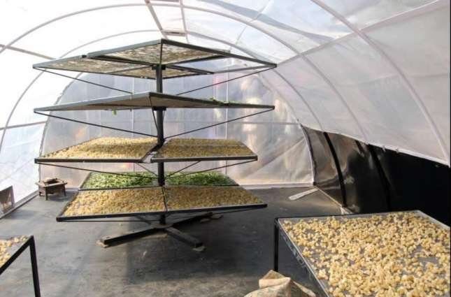Farmers capacitated to use solar technology for drying of dates