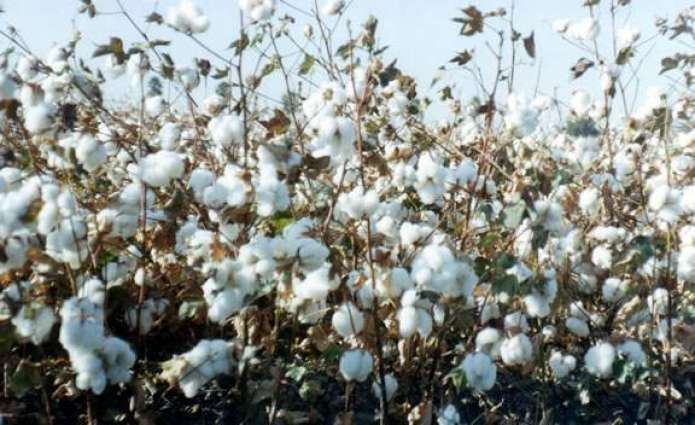 Spot rates of cotton (Crop 2015-2016)