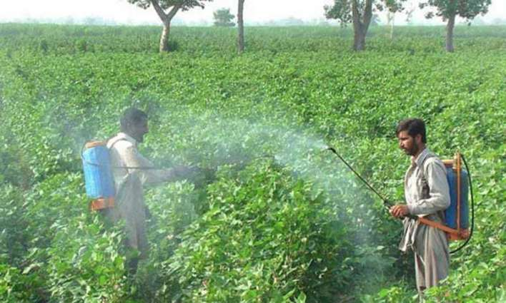 Experts issue spray guidelines for cotton farmers