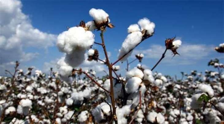 Spot rates of cotton (Crop 2016-2017)