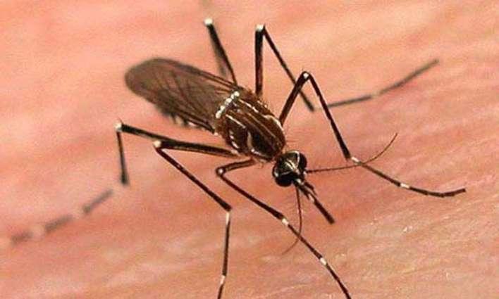 Auqaf deptt holds dengue awareness walk