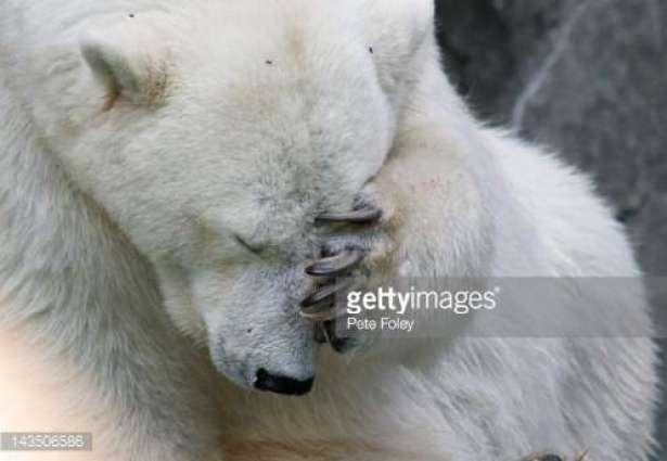 Sad Polar bear found in Chinese Shopping mall