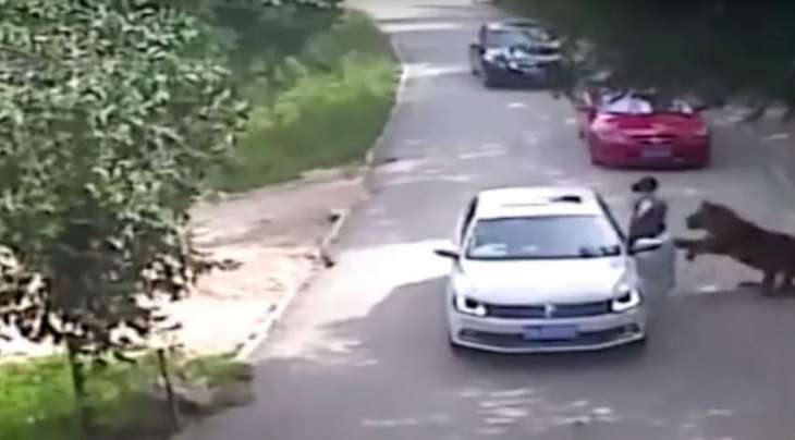 Tiger attacked a woman in Beijing, China