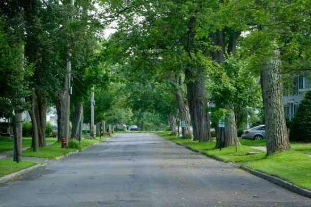 700,000 trees to be planted in city