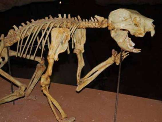 Ancient Australian flesh-eating marsupial discovered