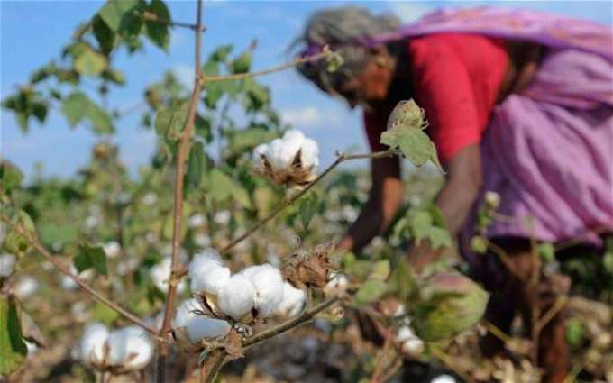 Various proposals to enhance cotton production reviewed