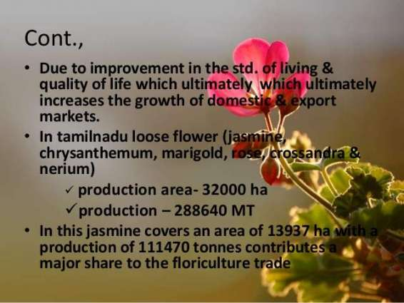 'Good scope of joint ventures in floriculture'