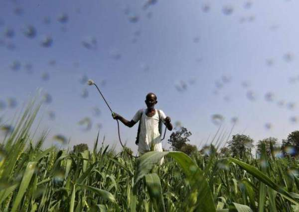Crackdown on spurious fertilizers, pesticides ordered