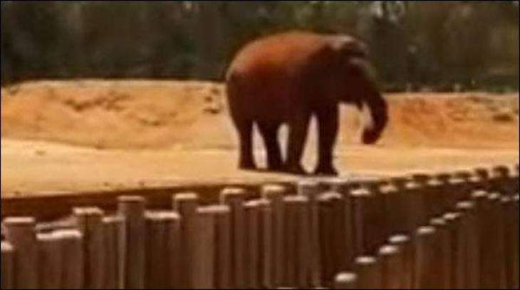 Morocco: Elephant killed 7-year-old girl