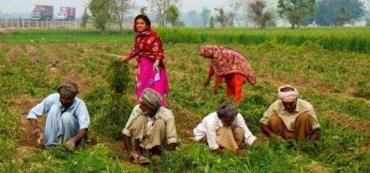 Advisory for farmers
