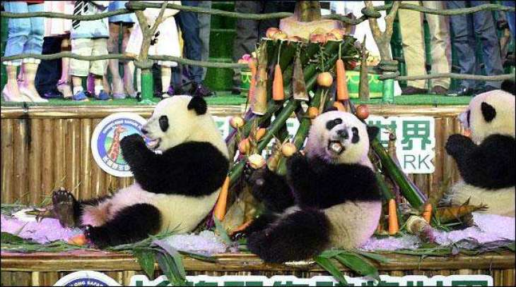Panda's second birthday was celebrated with fervor in China