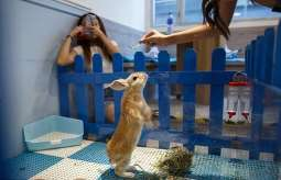 Rabbit Island café opened in Hong Kong