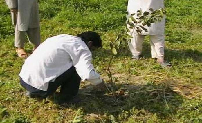 Twelve mln saplings to be planted in Sindh during Monsoon plantation drive