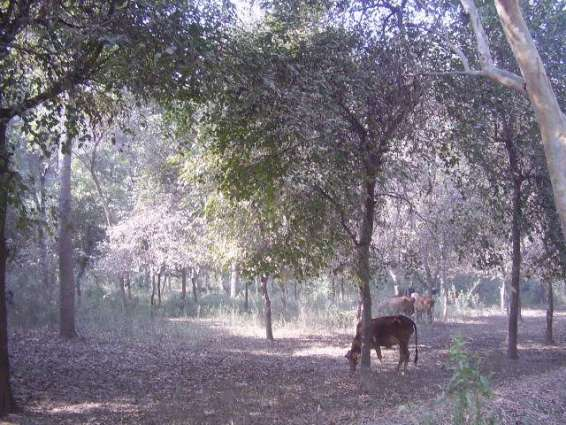 پنجاب اچ جنگلات دے زیر کاشت رقبے اچ ودھارے دی حکمت عملی دے تحت 2016دے جاری ساونڑ سیز ن دے دوران صوبے اچ 90لکھ نویں بوٹے لاتے ویسن
