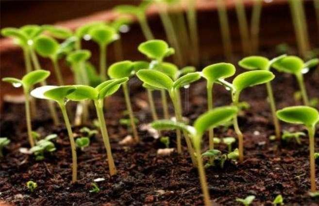 Monsoon tree plantation drive begins in AJK