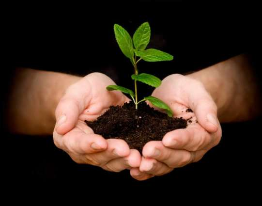 The Monsoon Tree Plantation campaign starting today in Punjab