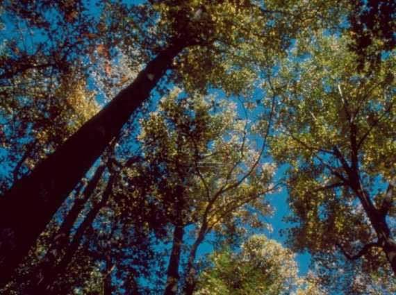 Trees help control climate change issues: experts