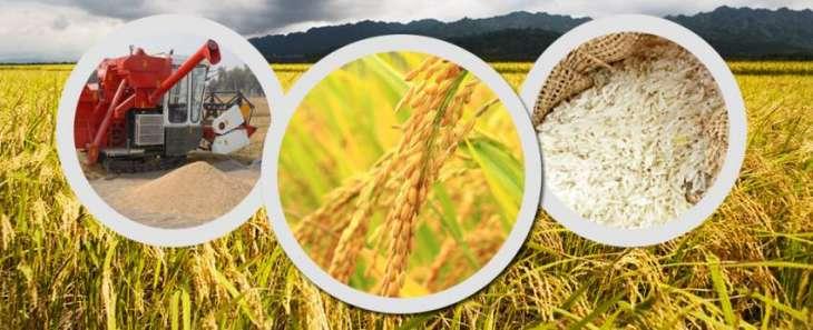 304 agri-kits distributed among field staff
