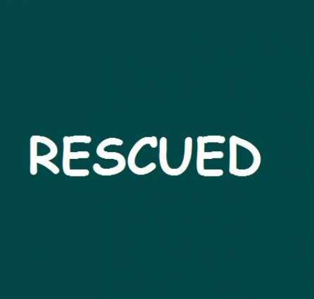 12-year-old boy has been rescued from Jungshahi, Thatta