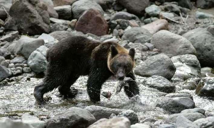 Japan safari park worker killed in bear attack