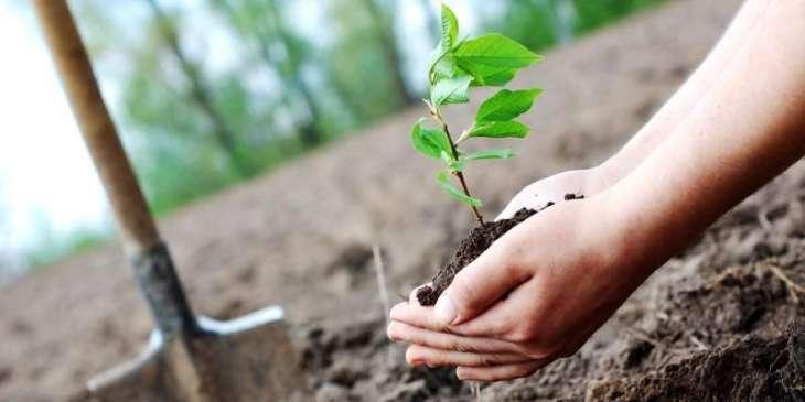 Tree plantation drive starts