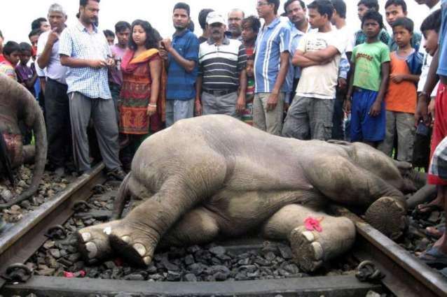 Four elephants killed by Sri Lankan train