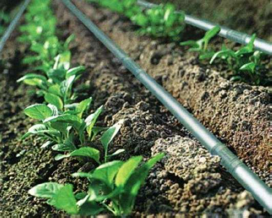 Punjab govt to install drip irrigation system on 10,000 acres