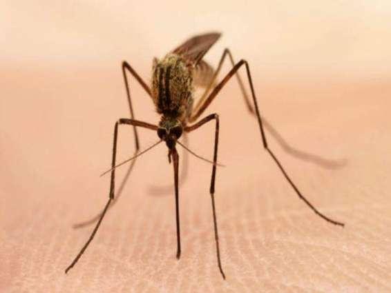 ملک اچ ملیریا بخار توں بچائو اتے کنٹرول سانگے حفاظتی اقدامات ضروری ہن ،ماہرین صحت