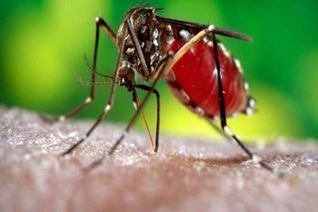 Dengue control drive to be intensified