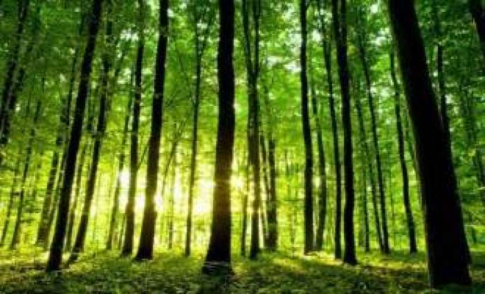 Forestation drive kicked off in South Waziristan