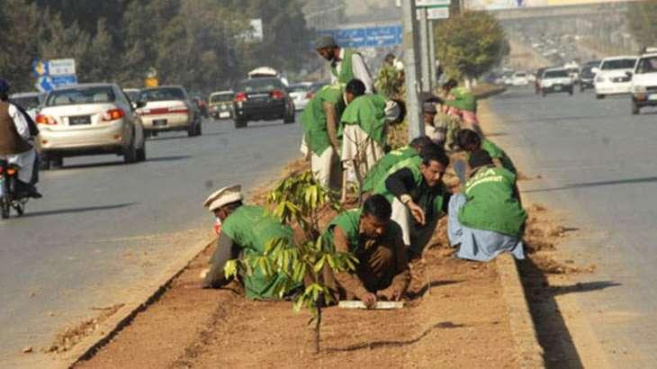 CDA ready to launch Monsoon Tree Planation drive