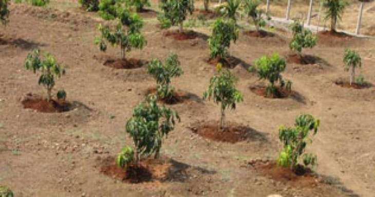 Green Pakistan programme to be launched in current month