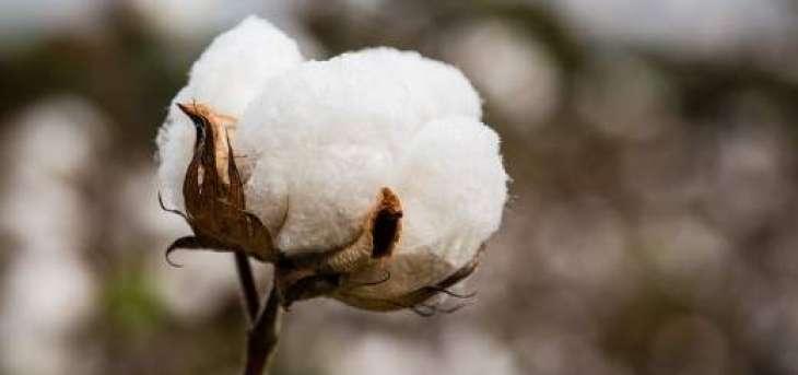 CCAC to meet next week for assessing cotton crop volume