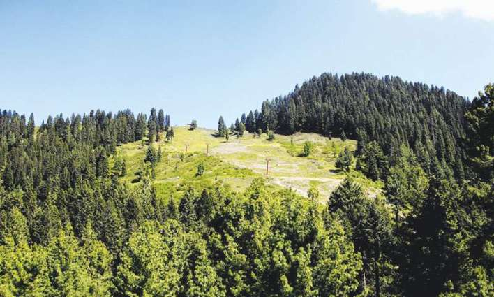 Forest policy awaits CCI approval