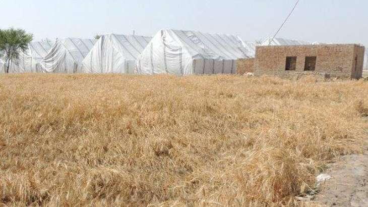 پنجاب حکومت دا کساناں نوں سمارٹ فون دین دا فیصلا