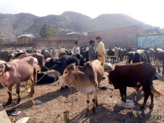 Sale of sacrificial animals banned in city area