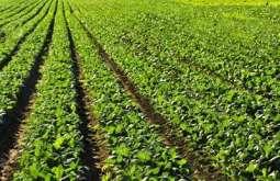 جو دی فصل کلراٹھی زمیناں اچ کامیابی نال اگائی ونج سگدی اے،زرعی ماہرین