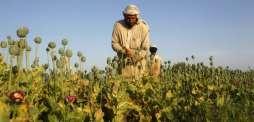 Afghan opium production soars: UN
