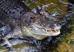 Debate about croc numbers reignited in Australia