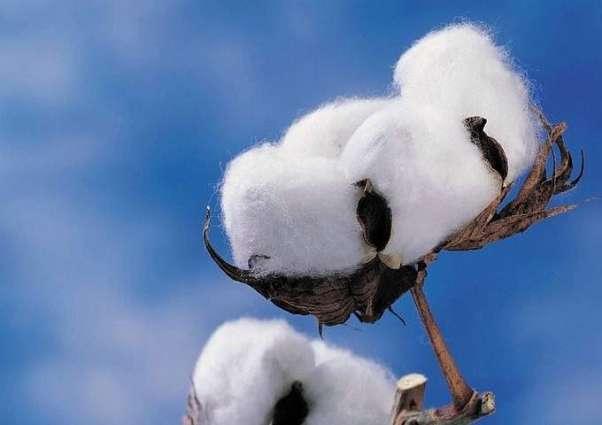 6.9 m cotton bales reach ginneries across Pakistan, arrivals