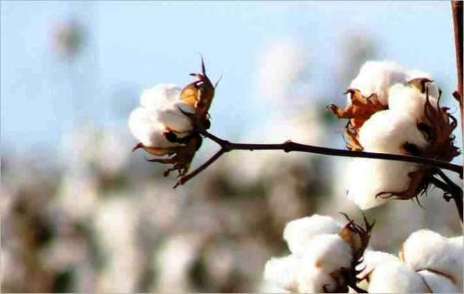 Five-day International Cotton Advisory Committee meeting concluded