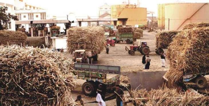 Three sugar mills of Shaheed Benazirabad ignite boilers for crushing