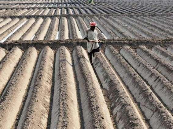 Farmers urged to focus on tunnel farming
