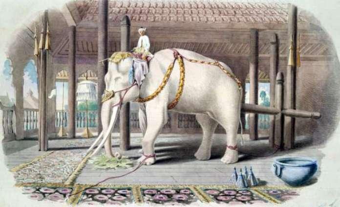 White elephants utilized to mourn passing of Thai king