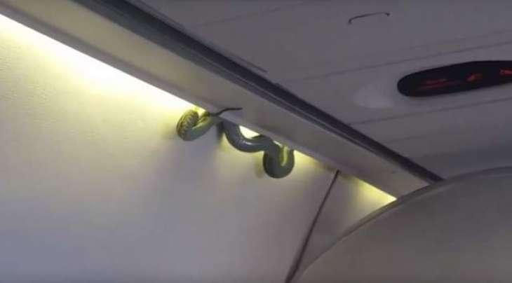 غیر ملکی ائر لائن دے جہاز وچ زہریلا سپ وڑ گیا، مسافر پریشان