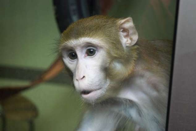 New device used in monkeys sparks hope of paralysis cure