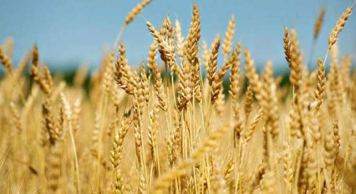 Farmers urged to complete wheat sowing till Nov 20