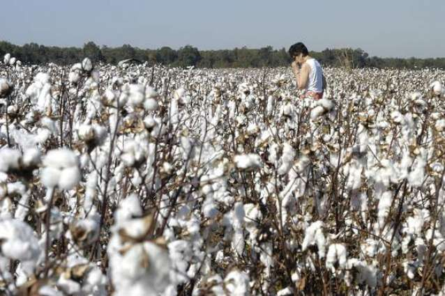 Tele-Cotton SMS service for cotton growers inaugurated